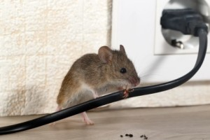 Mice Control, Pest Control in Aldgate, Monument, Tower Hill, EC3. Call Now 020 8166 9746